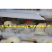 Buy cheap Chicken Farming Hot Galvanized Cage H Type Battery Baby Chicken Cage & Small Chick Coop with 112 Birds for Iran from wholesalers