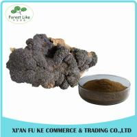 Natural Treat Diabetes Innocuous Health Products Chaga Mushroom Extract Powder with Polysaccharides,Betulin Manufactures