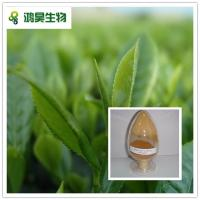 China 100% natural good quality Green tea extract with Catechin 30%-90% on sale