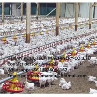 Poultry & Livestock Farm Silver Steel Automatic Broiler Chicken Ground Raising System with Nipple Drinker System Manufactures