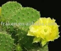 Cactus extract powder Manufactures