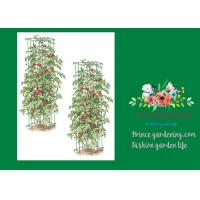 """Heavy Duty Metal Square Tomato Cages With 8"""" Square Openings Manufactures"""