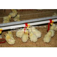 Poultry & Livestock Farm Silver Steel Automatic Broiler Chicken Ground Rearing System with Nipple Drinker System Manufactures