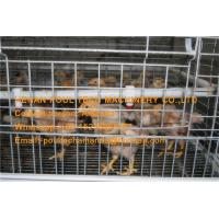 Chicken House Steel Silver White Automatic Small Chicken Cage Coop for Brooding Room with Feeding & Drinking System Manufactures