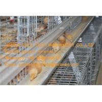 Quality Brooding Room Steel Cage A Type Automatic Small Chicken Cage for Chicken Shed for sale