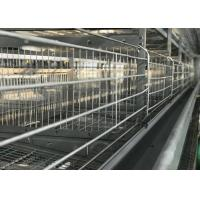 High Efficiency Automatic Chicken Waterer System / Broiler Automatic Drinker