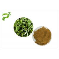 Green Tea Polyphenols Plant Extract Powder 95% For Dietary Supplement Weight Loss Manufactures