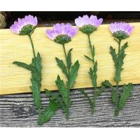 Purple Dried Chrysanthemum Flower Color Optional For Candle Decoration Manufactures