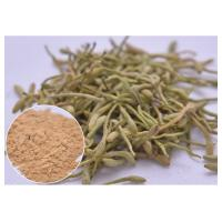 treat cold, fever and infection Chlorogenic acid 5%, 25% Lonicera japonica Extract Honeysuckle flower powder Manufactures