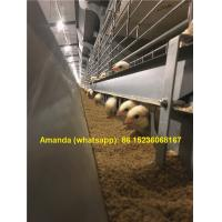 Buy cheap Iran Chicken Farm Hot Galvanized Cage H Type Battery Baby Chicken Cage & Small Chicks Coop with 112 Birds Chicken Feeds from wholesalers