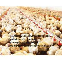 Poultry Farm Broiler Slatted Floor Raising System with Feeding Pan System & Drinking System in Chicken House Manufactures