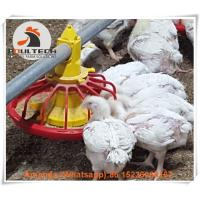 Chicken Farm Broiler Deep Litter System with Feeding Pan Line & Broiler Floor Breeding System in Chicken Shed Manufactures