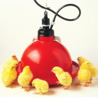 Quality Poultry & Livestock Farm Plastic Red Orange Automatic Plasson Chicken Drinker for Chicken Floor Raising System for sale