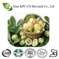 GMP factory supply the garcinia cambogia extract Manufactures