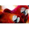 2012 best seller 25*35cm PET 3d paintings for sale Manufactures
