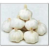 Pure White Garlic Manufactures