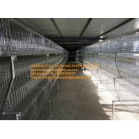 Poultry Farm Silver Hot-dip Galvanized Sheet Simple H Frame Battery Meat Chicken Cage & Broiler Coop System Manufactures