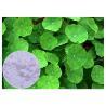 Anti Inflammatory Gotu Kola Leaf Extract , Natural Centella Asiatica Leaf Extract Manufactures