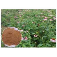 Chicory Acid Pure Herbal Supplements , Whole Herb Echinacea Purpurea Extract Manufactures