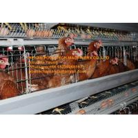 Quality New Steel Sheet Silver White Poultry Farm Automatic Egg Hen Chicken Cage Equipment with 90-200 Chickens for sale