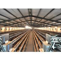 Automatic Layer Chicken Cage System with Eggs Collection System Manufactures