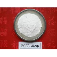 China 100% Natural Green Tea Extract Polyphenols and EGCG 98% powder on sale