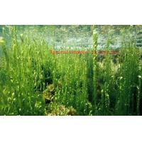 Healthy Organic Seaweed Powder For Food Industry CAS 977001 75 4 ISO Certification Manufactures