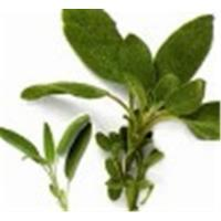 Sage Leaves Manufactures