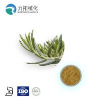 1. GMP Manufacture Rosemary Extract Rosmarinus officinalis Manufactures