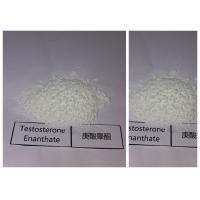 Raw Bulking Cycle Steroids Testosterone Enanthate White Powder 315-37-7 Manufactures
