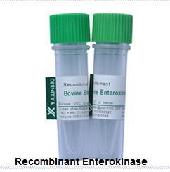Recombinant Enterokinase  E.coli Recombinant Enterokinase Supplier Manufactures