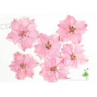 Eternal Floral Dried Pressed Flowers Larkspur Diameter 3CM For Christmas Decorations Manufactures