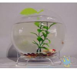 Plastic modern acrylic fish tank Manufactures