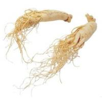 China Low pesticide American ginseng extract powder 7% Ginsenoside, Dried ginseng, american ginseng extract on sale