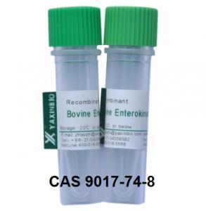 Recombinant Enterokinase Enzyme and CAS 9017-74-8 Enzyme Enterokinase Manufactures