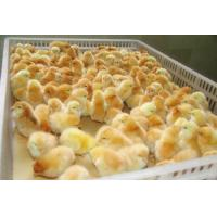 White Orange Color Plastic PE Material Broiler Chicken Carriage Cage & Transport