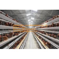 Quality Poultry Farming A Type Battery Layer Chicken Cage Equipment  Cold or Hot Galvanized Steel Material Silver White Color for sale