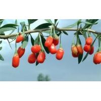 Goji Berries Manufactures