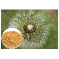 China Dandelion Root Plant Extract Powder Brown Color HPLC 5% Food Grade Anti - Aging on sale