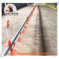 Poultry Farm Hot Galvanized Broiler Chicken Floor Breeding System with Automatic Nipple Drinker System in Chicken Shed Manufactures
