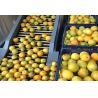 3 TPH Complete Orange Apple Bottled Fruit Processing Line Turnkey Project Manufactures