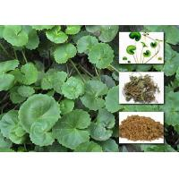 Gotu Kola Extract Powder Cosmetic Raw Materials Asiaticoside For Enhancing Immunity Manufactures