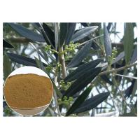 Hydroxytyrosol Olive Leaf Extract For High Blood Pressure CAS 10597 60 1 Manufactures