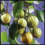 Garcinia Cambogia Extract powder. Manufactures