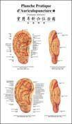 Auricular Acupunctrue Point Wall Chart (French-Chinese) Manufactures