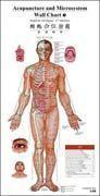 Acupunctrue and Microsystem Wall Chart (English-Chinese) Manufactures
