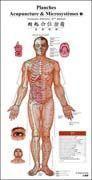Acupunctrue and Microsystem Wall Chart (French-Chinese) Manufactures