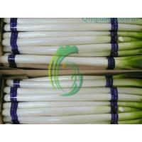 chinese scallion exporter Manufactures