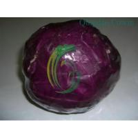 purple cabbages.exporter Manufactures