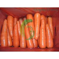Carrot exporter Manufactures